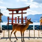 Japan travel tips 6/24/2015 Narita Express,kimono&Hiragana