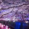 JapanTravelTips 6/6/2015 Healthy juice,Ramen&Himeji