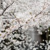 JapanTravelTips 6/14/2015 Awa odori,Japanese castle&Wagyu beef